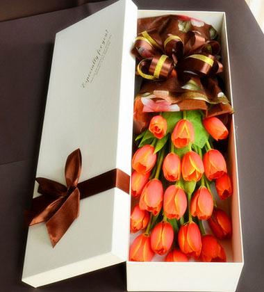 上海-郁金香-花盒
