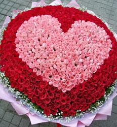 上海-999朵玫瑰